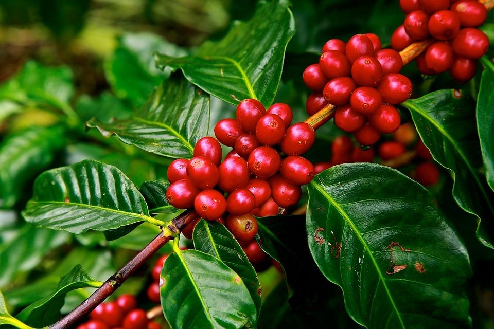 coffee-beans-1650788_960_720